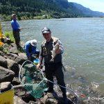 American Shad Fishing - Bonneville Dam