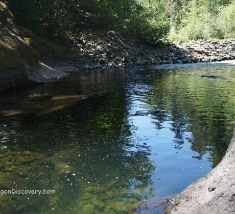 Sharps Creek Swimming