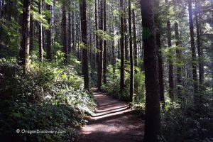Drift Creek Falls Hike - Trail