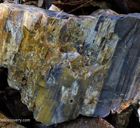 Petrified Wood Oregon