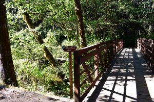 Alsea Falls Trails