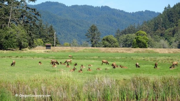 Dean Creek Elk Viewing Area – Wildlife Scenery | Oregon Coast