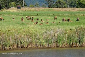 Deer Creek Elk Viewing Area
