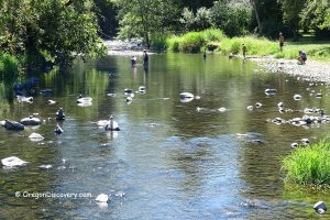 Butte Creek - Scotts Mills County Park