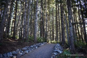 Cape Meares Trail