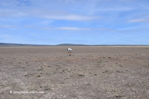 Flook Lake - Hart Mountain National Antelope Refuge