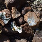 Hampton Butte Petrified Wood