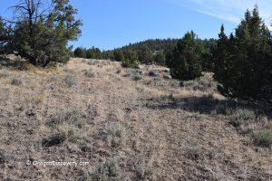 Dendrite Butte Oregon