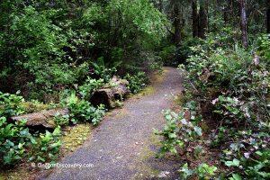 Coffenbury Lake Trail