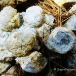 White Rock Springs Thundereggs