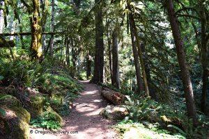 Soda Creek Falls Trail