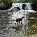 Crowfoot Falls Swimming